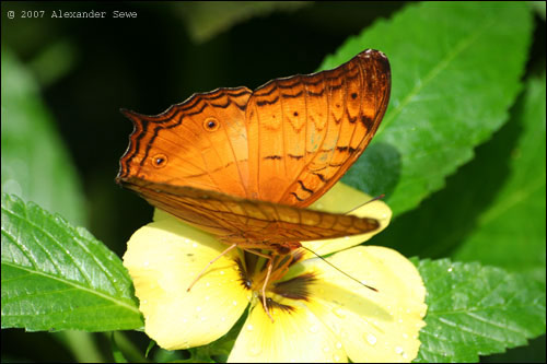 Butterfly in butterfly park Kuala Lumpur Malaysia